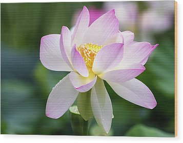 Wood Print featuring the photograph Lotus by Edward Kreis