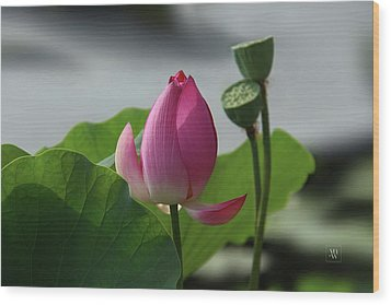 Lotus Flower In Pure Magenta Wood Print by Yvonne Wright