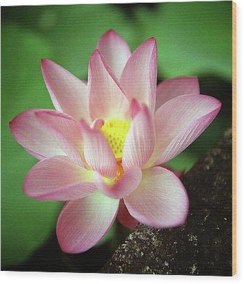 Lotus Flower Wood Print by Yoshika Sakai