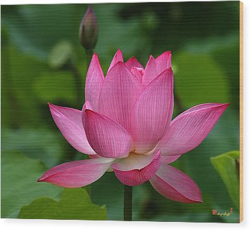 Lotus--shades Of Past And Future Dl029 Wood Print