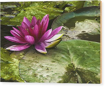 Lotus Wood Print by Svetlana Sewell