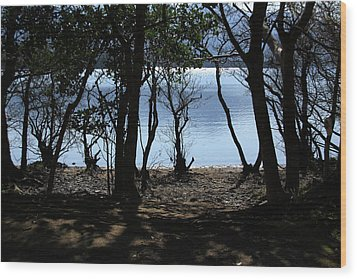 Wood Print featuring the photograph Lough Leane Through The Woods by Aidan Moran