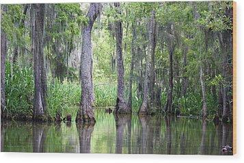 Louisiana Swamp 5 Wood Print