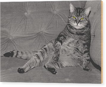 Lounge Cat Wood Print by Joy McKenzie