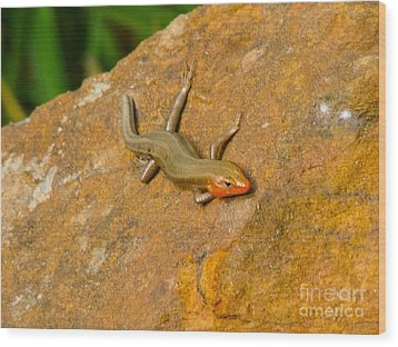 Lounging Lizard Wood Print by Rand Herron