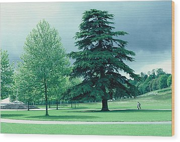 Lourdes Wood Print by Richard Barone