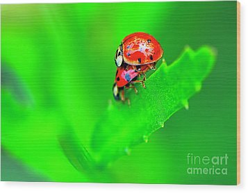 Wood Print featuring the photograph Love Bugs by Sharon Talson
