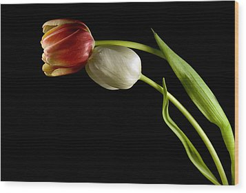 Wood Print featuring the photograph Love In Spring by Elsa Marie Santoro