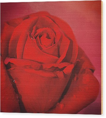 Wood Print featuring the photograph Love Is A Red Rose With Raindrops by Diane Schuster
