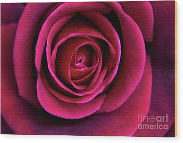 Wood Print featuring the photograph Love Is A Rose by Linda Lees