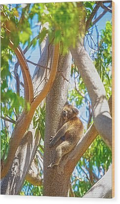 Wood Print featuring the photograph Love My Tree, Yanchep National Park by Dave Catley