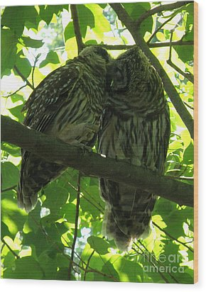 Love Owls Wood Print by Lainie Wrightson