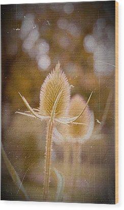 Loveletter Wood Print by Steve K