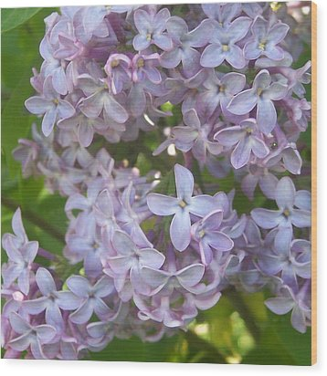 Lovely Lilacs Wood Print by Anna Villarreal Garbis
