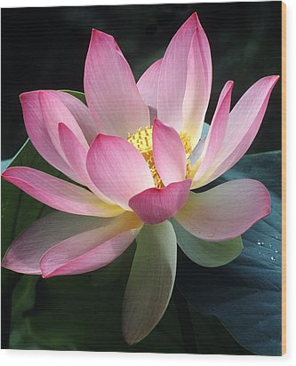 Lovely Lotus Wood Print by Elvira Butler