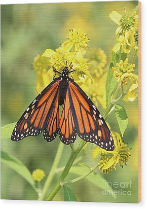 Lovely Monarch Wood Print