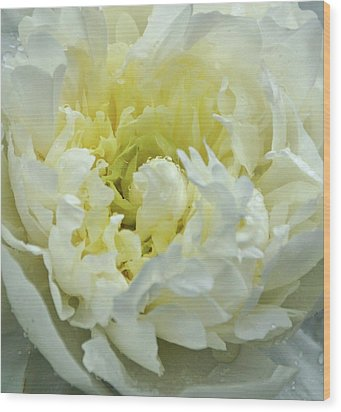 Wood Print featuring the photograph Lovely Peony by Sandy Keeton