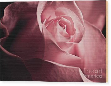 Wood Print featuring the photograph Lovely Pink Rose by Micah May
