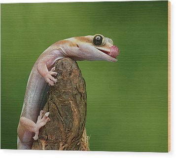 Wood Print featuring the photograph Lovely Water - Velvet Gecko by Nikolyn McDonald