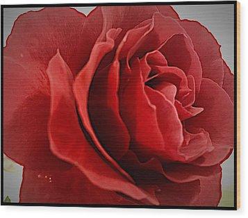 Love's Bloom Wood Print