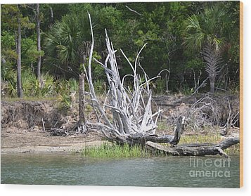 Wood Print featuring the photograph Low Country Driftwood by Carol  Bradley