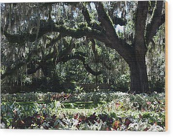 Wood Print featuring the photograph Low Country Series I by Suzanne Gaff