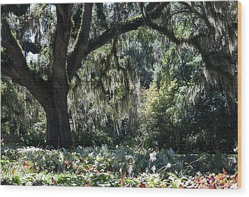 Wood Print featuring the photograph Low Country Series II by Suzanne Gaff