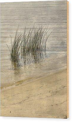 Low Tide Grass Wood Print by Randy Steele