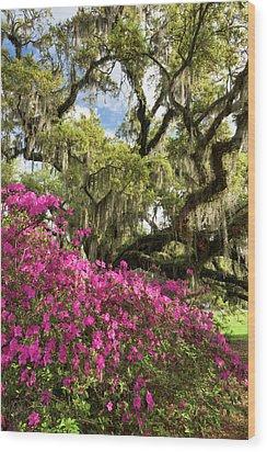 Lowcountry South Carolina Spring Azalea And Live Oak Wood Print by Mark VanDyke
