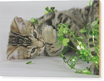 Lucky Kitten Wood Print by Shoal Hollingsworth