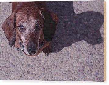 Wood Print featuring the photograph Lucy by Lora Lee Chapman