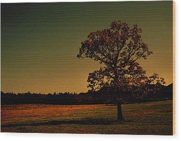 Lullabye Tree Wood Print by Nina Fosdick