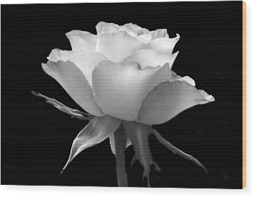 Luminous Rose Wood Print