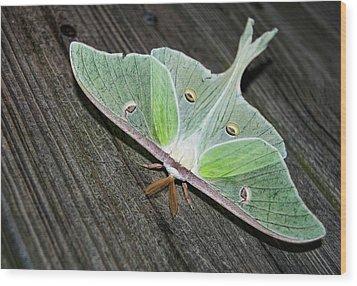 Luna Moth Wood Print by Amber Flowers