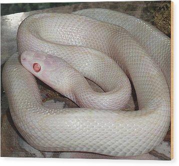 Luna White Snake Wood Print