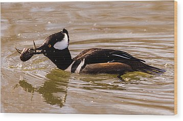 Wood Print featuring the photograph Lunchtime For The Hooded Merganser by Randy Scherkenbach
