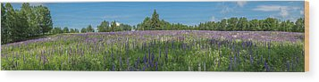 Lupine Field Wood Print
