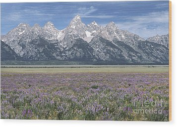 Lupine And Grand Tetons Wood Print