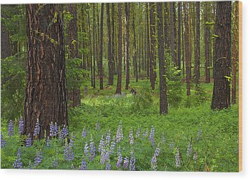 Lupine Carpet Wood Print by Mike  Dawson