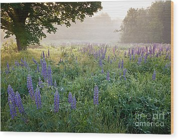 Lupine Field Wood Print by Susan Cole Kelly