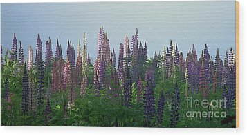 Lupine In Morning Light Wood Print