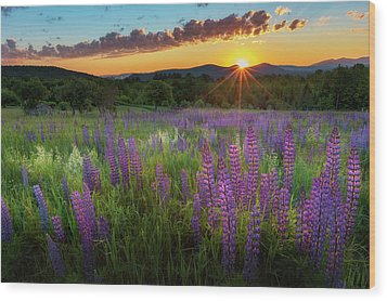 Wood Print featuring the photograph Lupine Lumination by Bill Wakeley