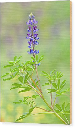Wood Print featuring the photograph Lupine by Ram Vasudev