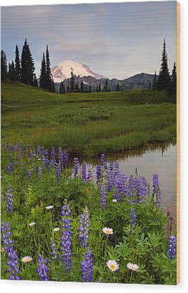 Lupine Sunrise Wood Print by Mike  Dawson