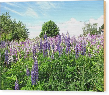 Lupins And Flocks Wood Print by Melissa Parks