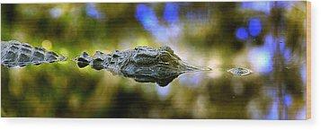 Lurking Gator Wood Print