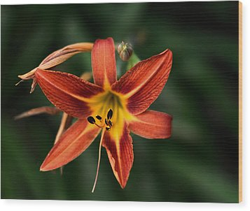 Luscious Tiger Lily Wood Print