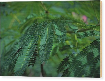 Lush Foliage Wood Print by Stefanie Silva