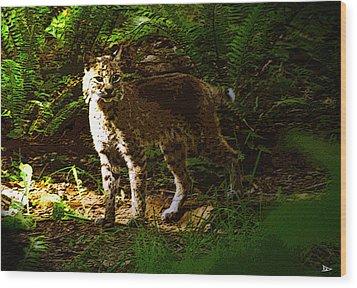 Lynx Rufus Wood Print by David Lee Thompson