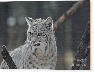 Lynx With A Very Unhappy Face Wood Print by DejaVu Designs